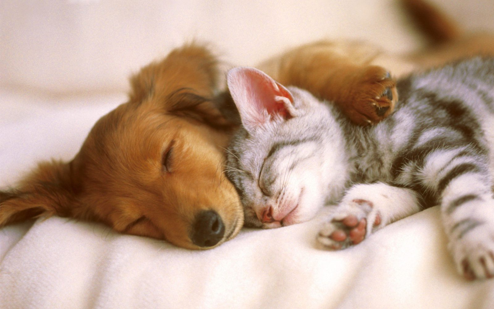 Animali Ereditieri Quali I Più Famosi Alberto Onofri Chiari Blog
